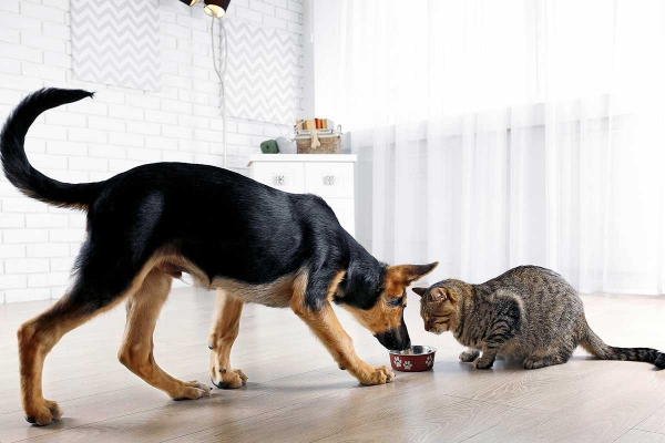 Can Dogs Eat Cat Food? How to Stop Dog From Eating Cat Food?