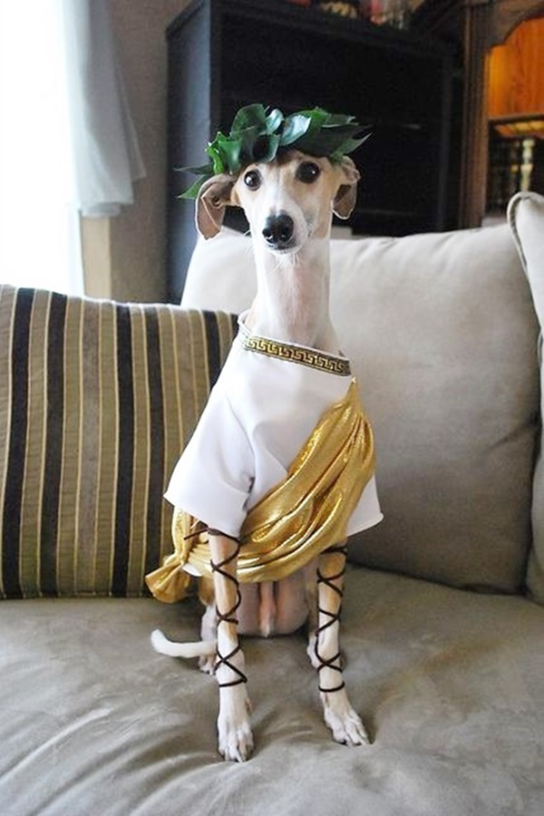 Best Halloween Costumes For Pets in Human History