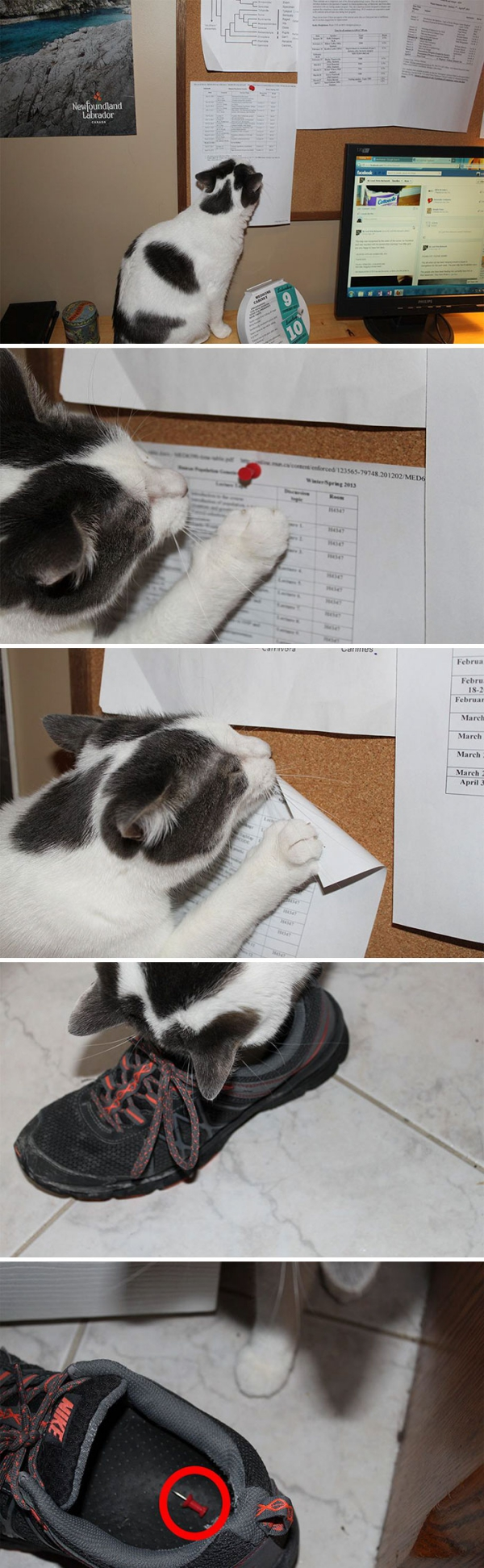 Funny Pictures of Cats being Naughty