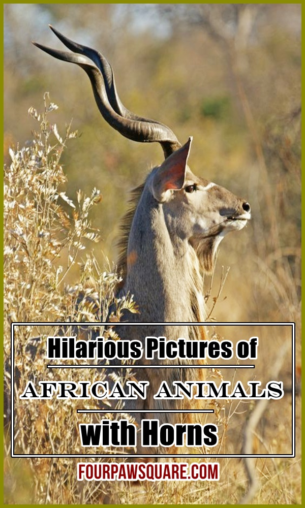 Hilarious Pictures of African Animals with Horns