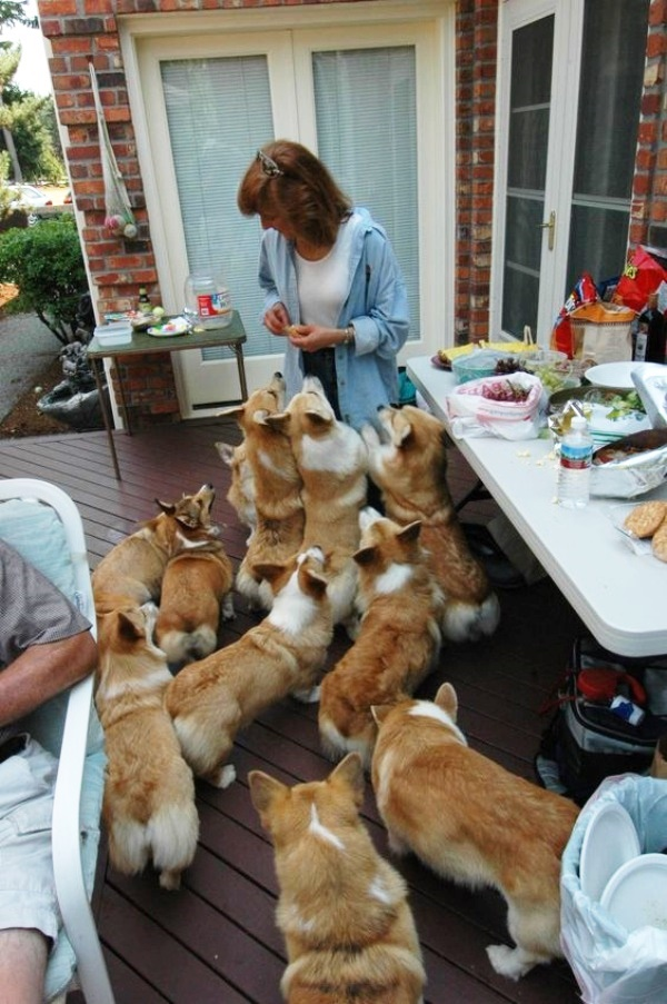 Laughable Pictures of House Full of Pets