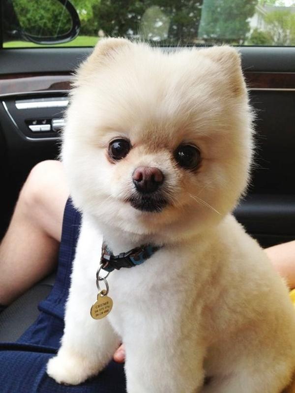 Most Hilarious Dog Haircuts