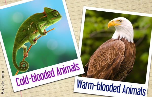 Difference Between the Cold Blooded and Warm Blooded Animals