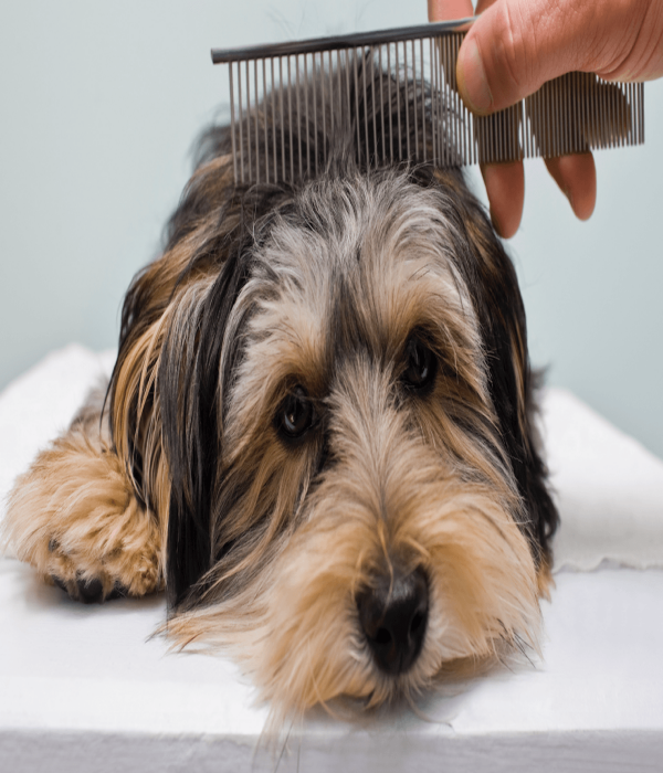 Dog Hair Grooming Tips to Maintain a Smooth Fur