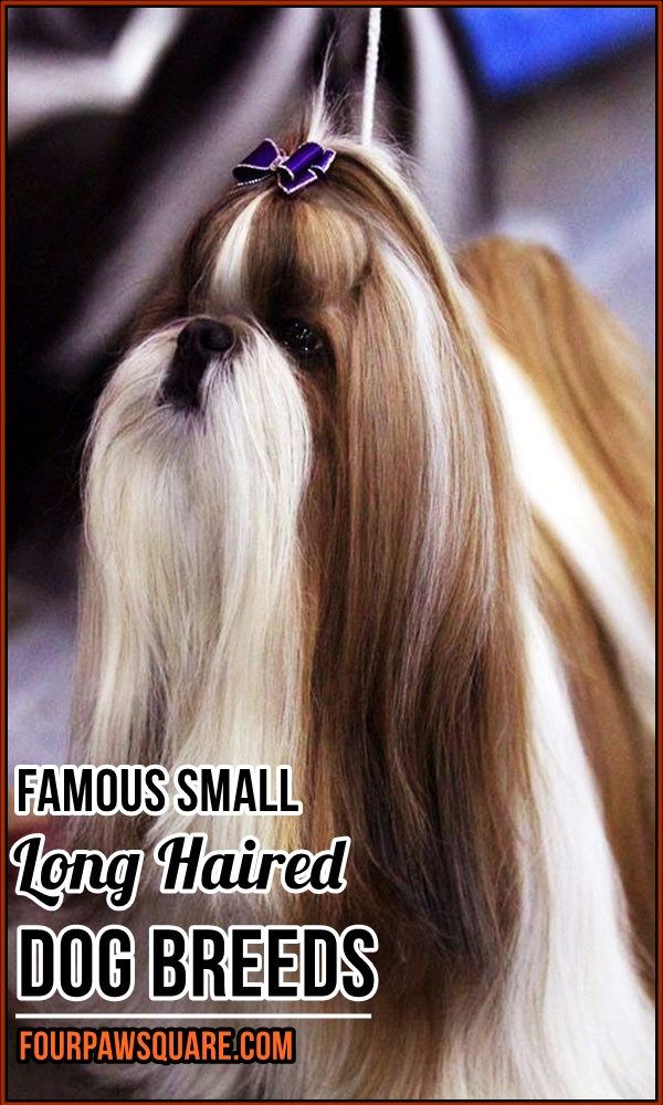 Famous Small Long Haired Dog Breeds