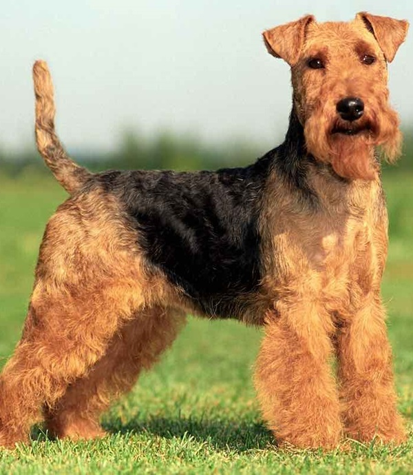 How Can Dog TailIndicates Breed What Is Your Dog Tail Shape