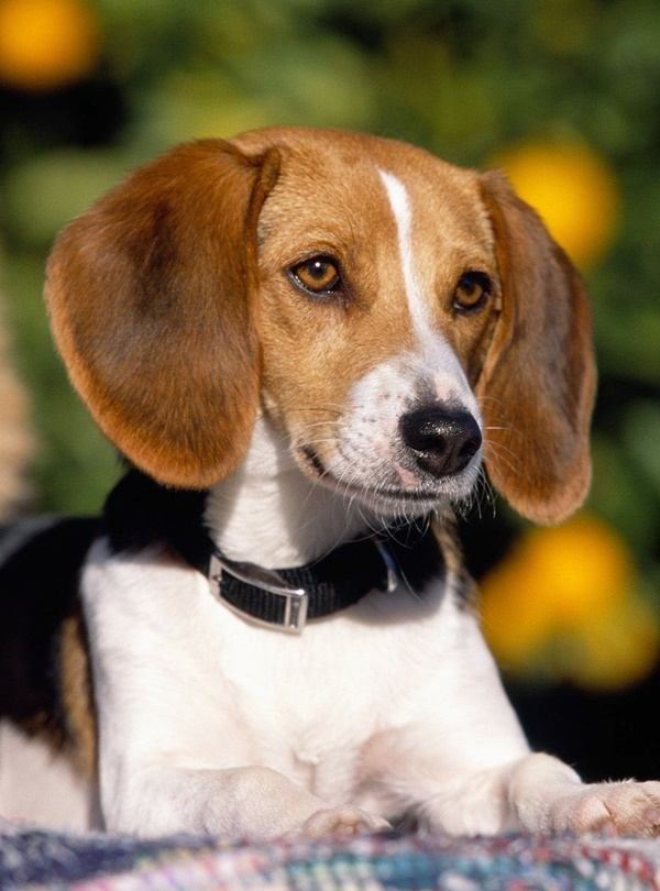 How to Identify Mutt Dog Breed