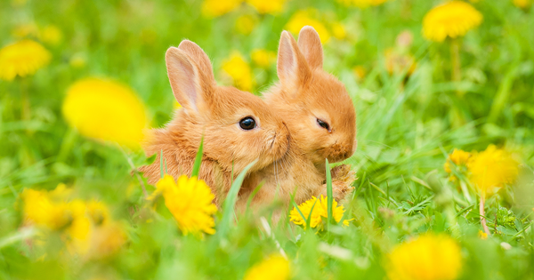 what causes sudden death in rabbits