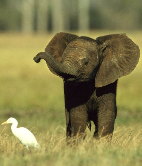 Amazing Pictures Of Baby Elephants Enjoying Their Moments