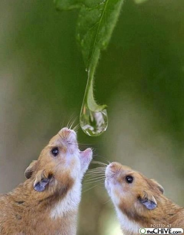 Cute and Adorable Pictures of Thirsty Animals