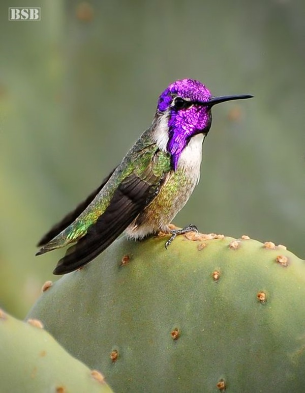 Different Types of Hummingbird with Pictures