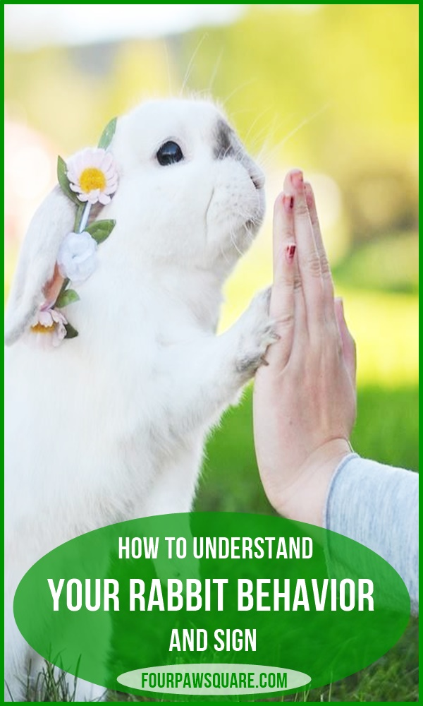 How to Understand your Rabbit Behavior and Sign
