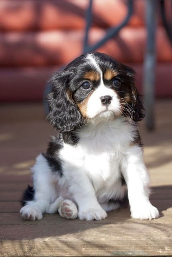 Most Popular Cheapest Dog Breeds in the World