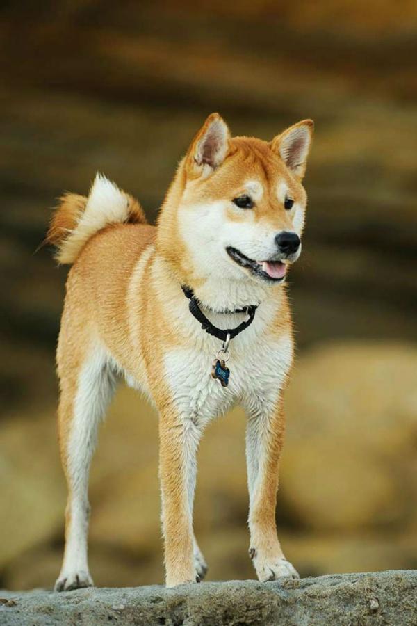 Healthiest Dog Breeds in the World