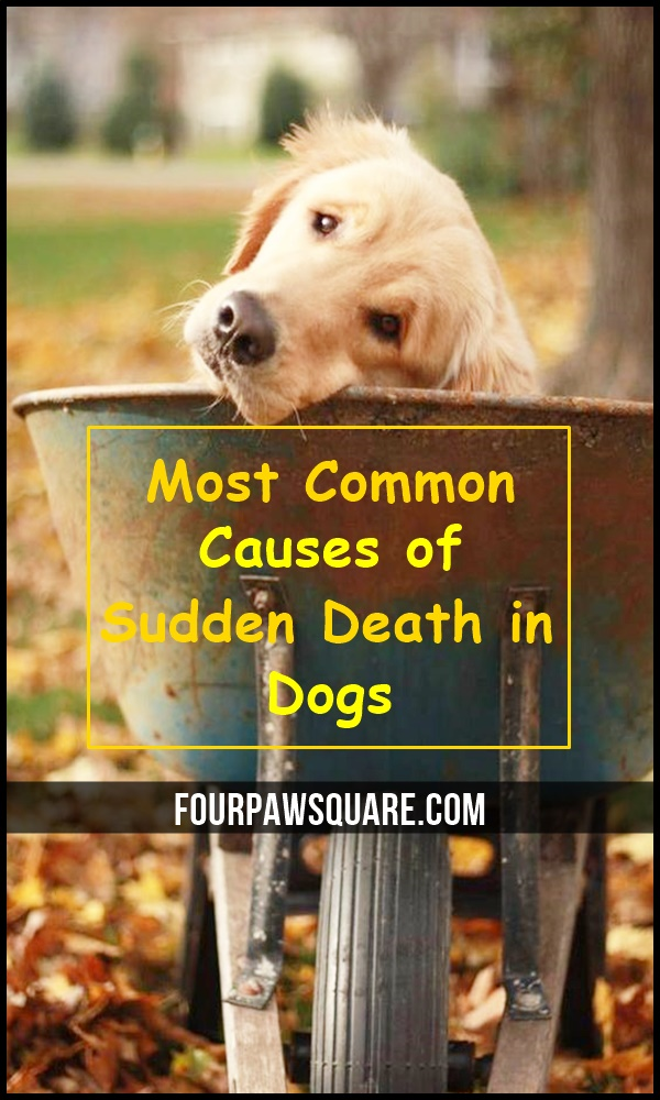 Most Common Causes of Sudden Death in Dogs