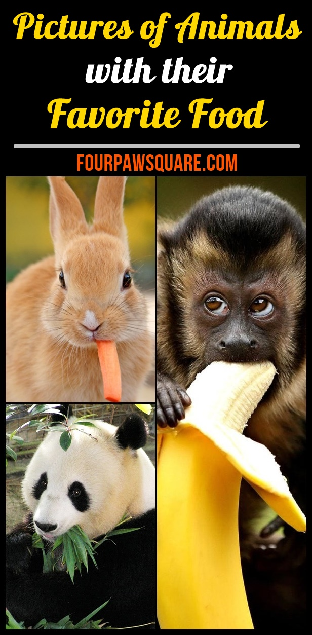 Pictures of Animals with their Favorite Food