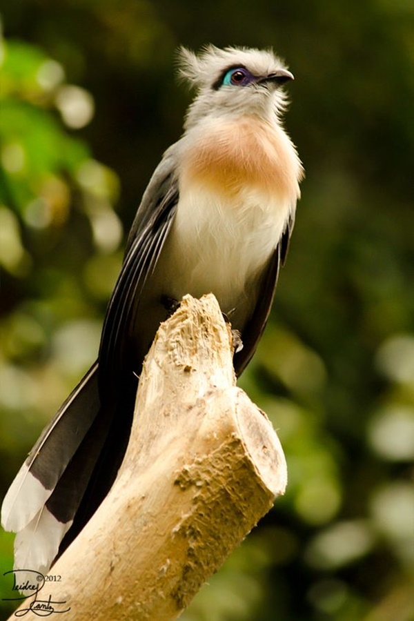 Bird With Long Beak
