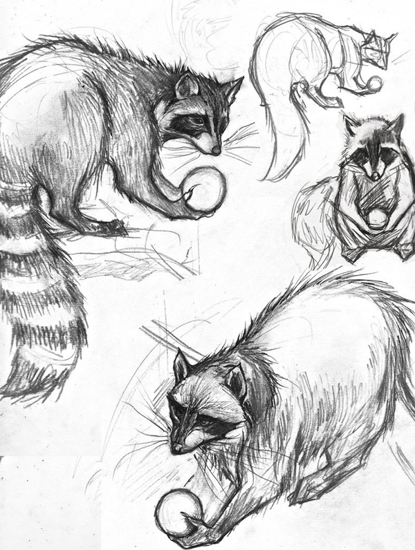Easy And Practicable Tailandfur Sketches