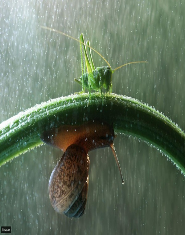 Excellent Photography of Animals in Rain