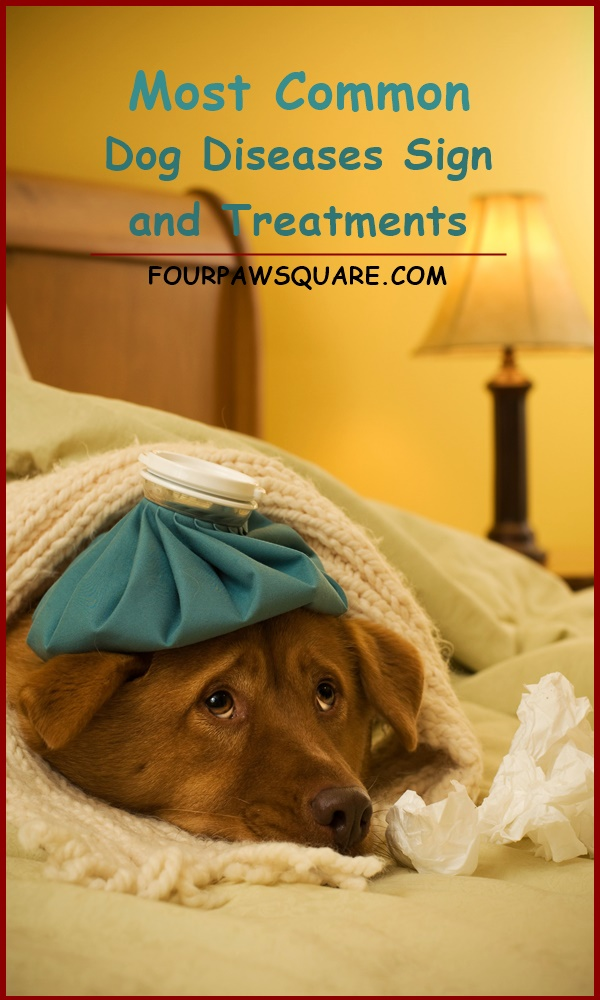 Most Common Dog Diseases Sign and Treatments