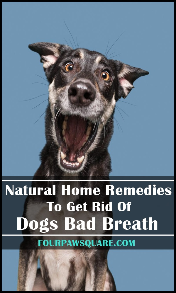 Natural Home Remedies To Get Rid Of Dogs Bad Breath