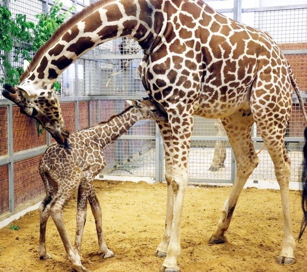 Animals with Really Long Gestation Time
