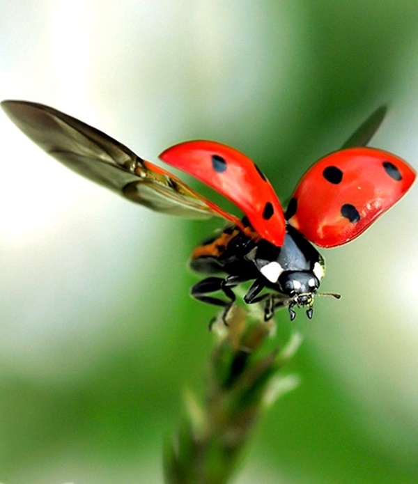 Beautiful Pictures of Animals Macro Photography