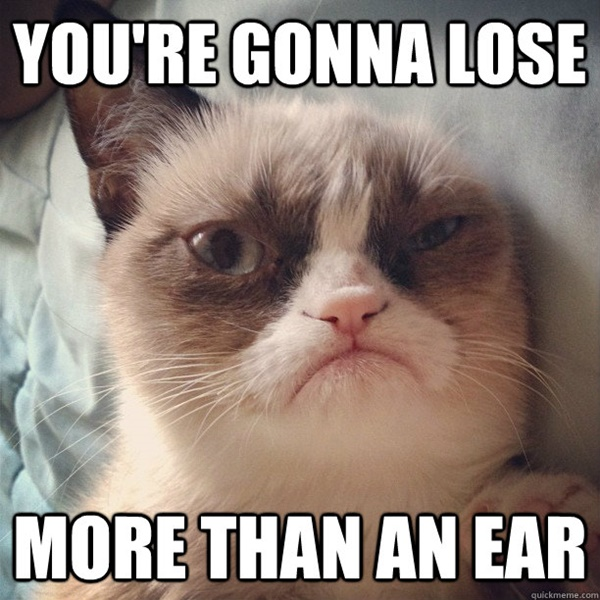 Funny Pictures Of Cat Memes To Brighten Up Your Day