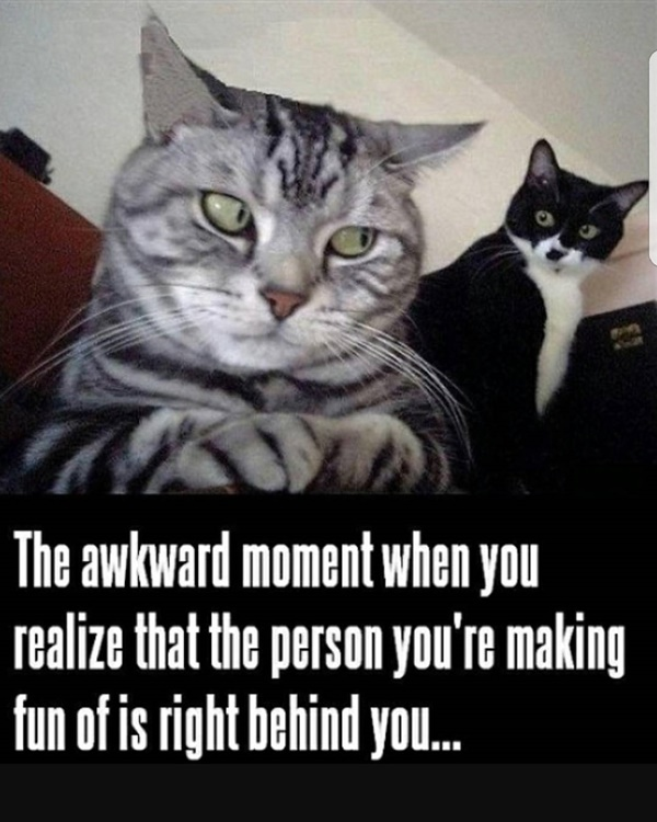 Funny Pictures of cat memes to Brighten up your day.