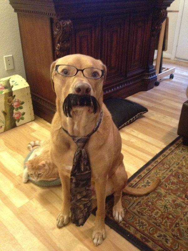 Funny Pictures of animals with Mustaches