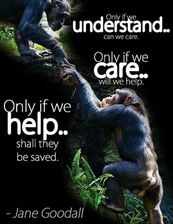 Popular Saying And Slogan On Save Animals