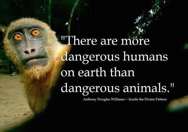 30 Popular Saying And Slogan On Save Animals