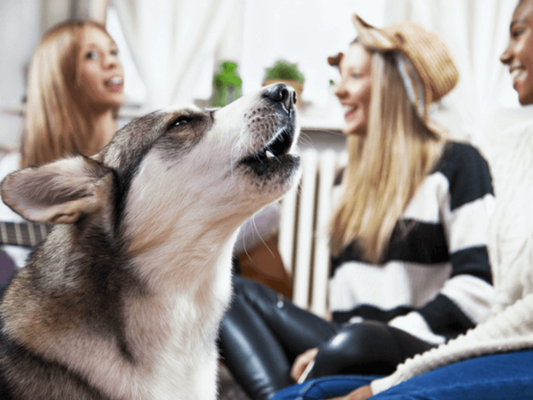 Possible Reasons Your Dog May Be Whining