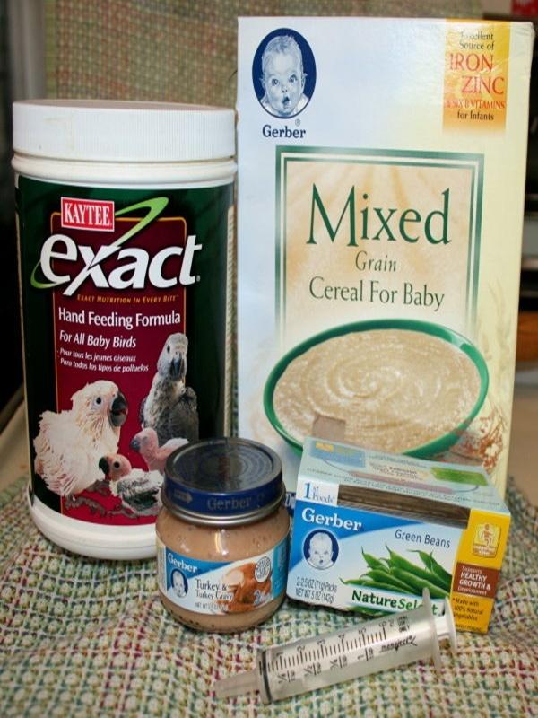 What To Feed Newborn Baby Birds