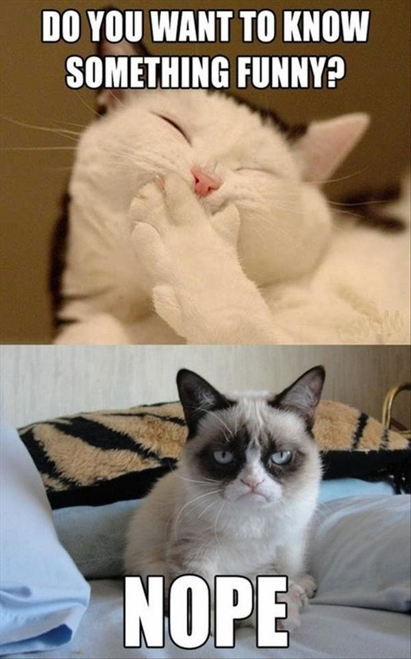 All-time Funny Cat Memes Ever On The Internet