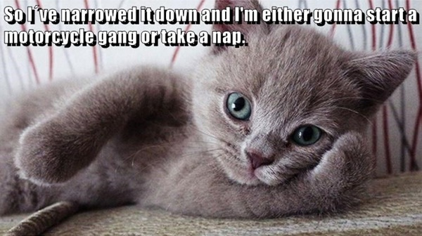 40 All Time Funny Cat Memes Ever On The Internet