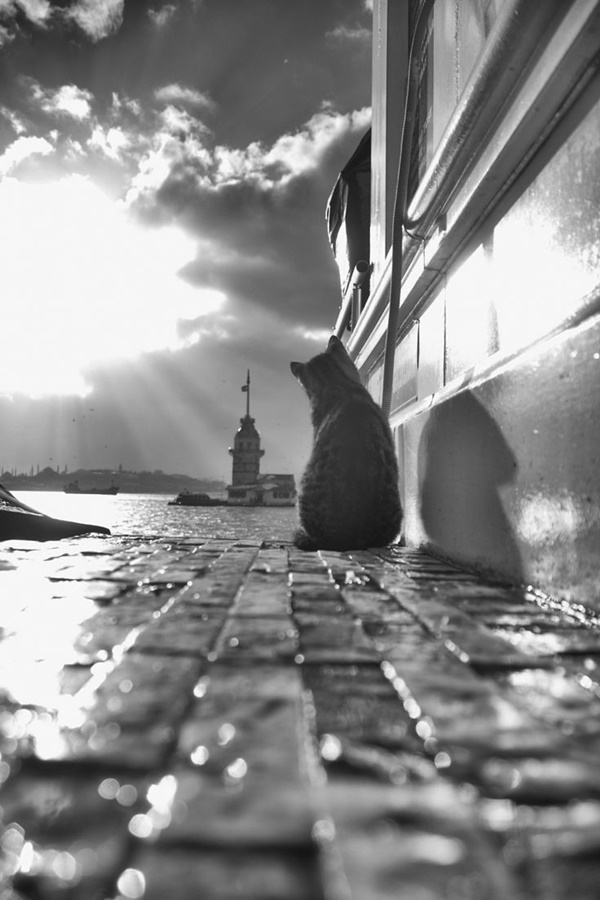 Amazing Collection Of Street Animals' Photography