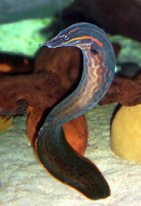 Amazing Facts About Sea Snake Which You Must Know