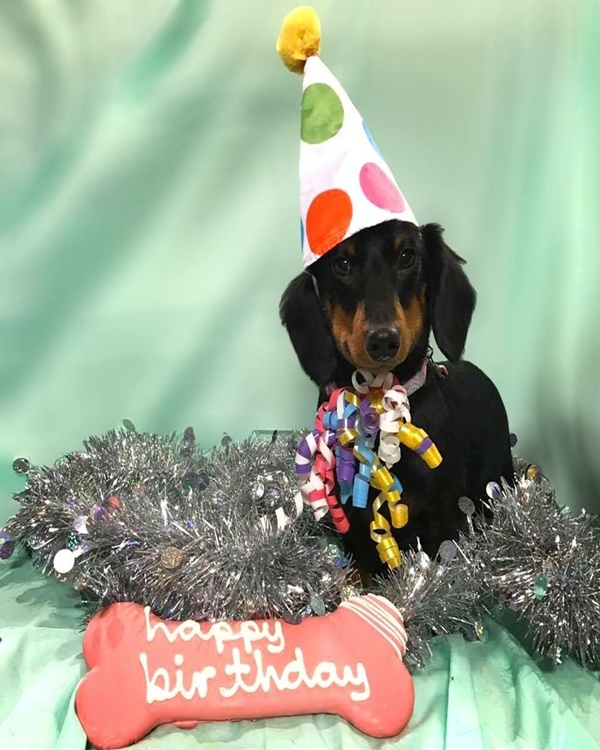 Amazing Ideas To Celebrate Your Dog First Birthday