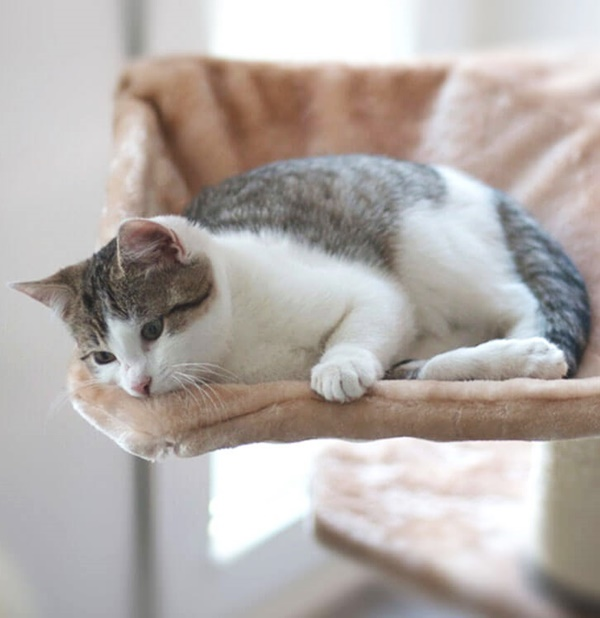 Cats In depression Symptoms and Treatment