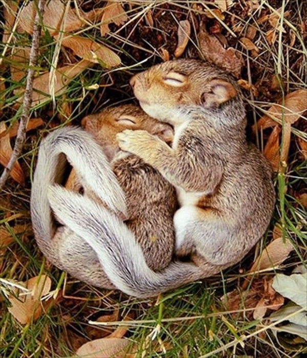 Cute Pictures of animals Sleeping on each other