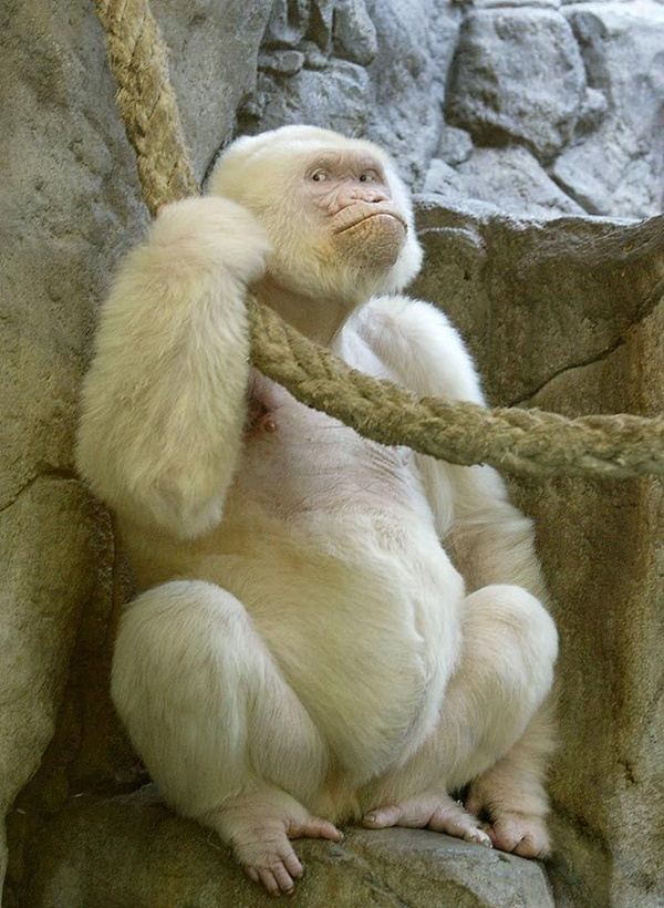 Extremely Beautiful Pictures of Albino Animals