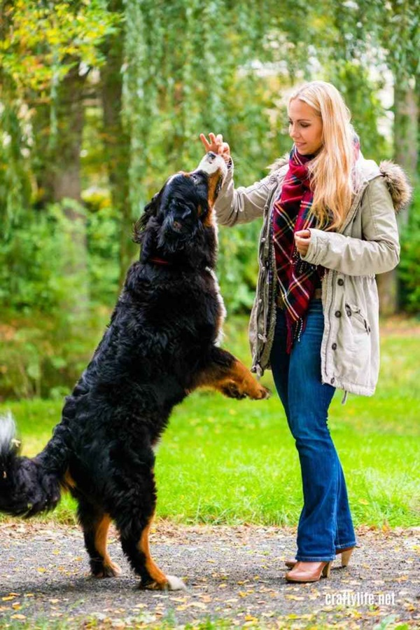 Fun Tricks You Can Teach Any Breed Of Dogs