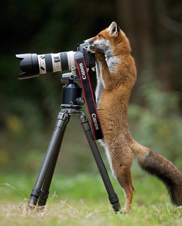 Funny Wild Animal Pictures to make yourday
