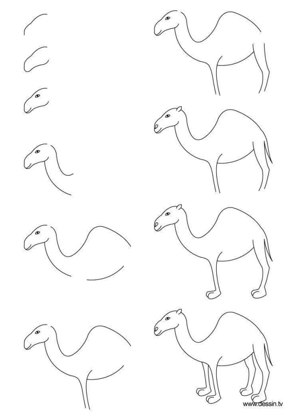 How to Draw a Camel Step by Step
