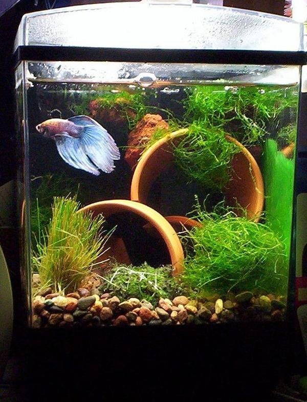 Ideas For Homemade Fish Tank Decoration Ideas