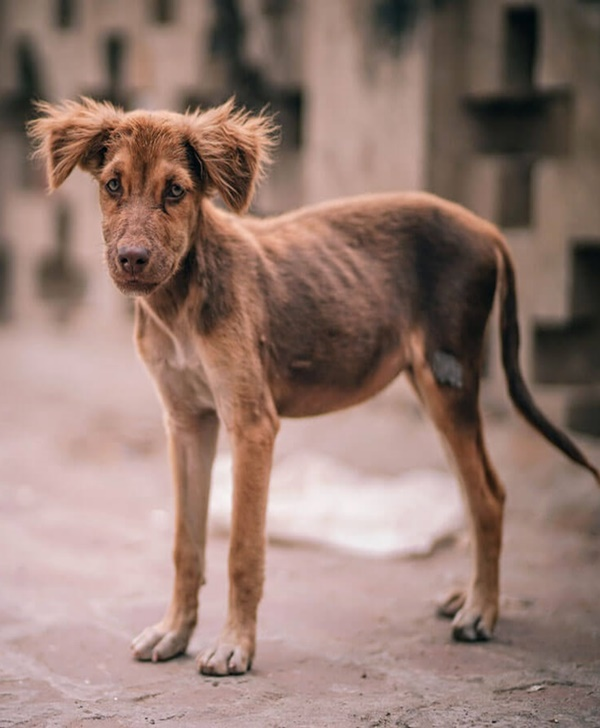 Symptoms of Cancer in Pet