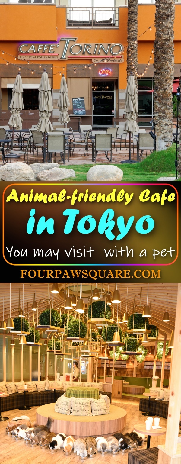 Animal-friendly Cafe in Tokyo: You may visit with a pet