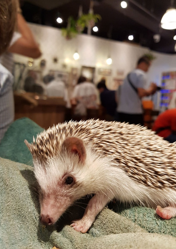 Animal-friendly Cafe in Tokyo You may visit with a pet