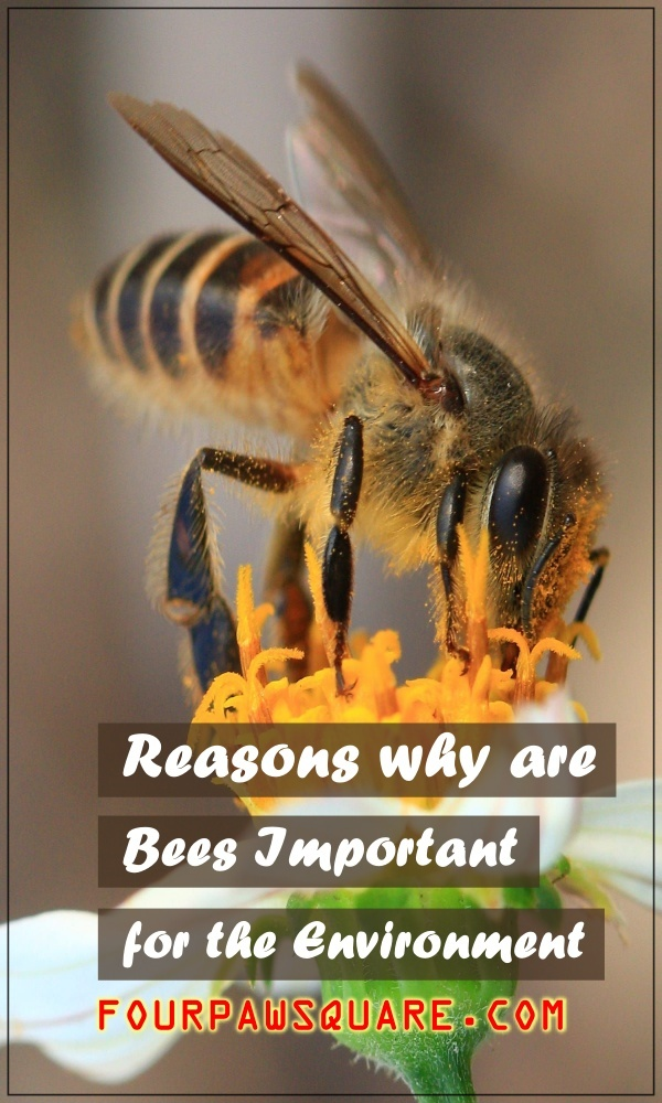 Reasons why are Bees Important for the Environment